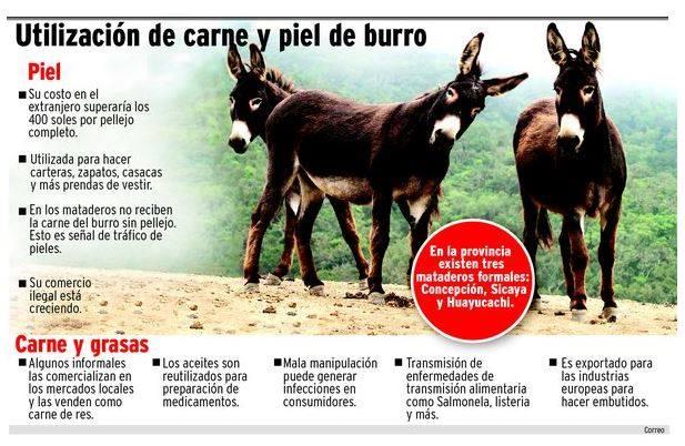 pela-burros-chilete